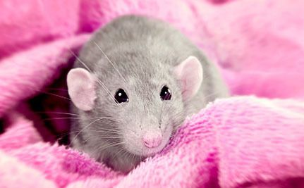 If one country can do this then all can! Victory! New Zealand Bans Animal Testing for Cosmetics