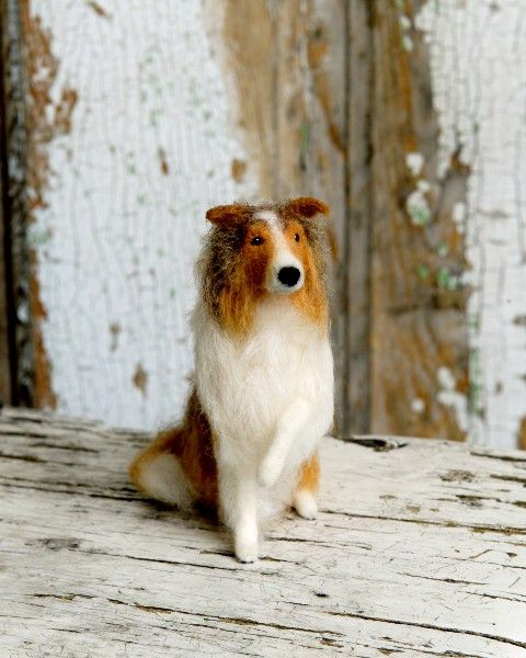 Lucy Maloney Collie. He's called Lassie!