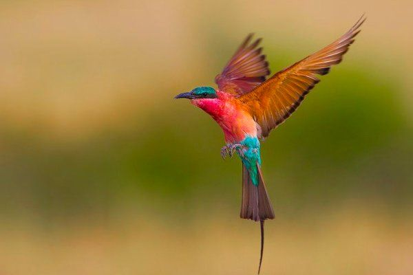 Vuela Como Un Ave Con Imagenes Aves Volando Pajaros Volando