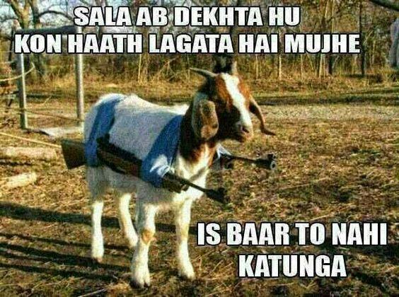 Bakra Eid Mubarak 2016 Best Funny Images, Trolls, Wishes, Messages. Download…