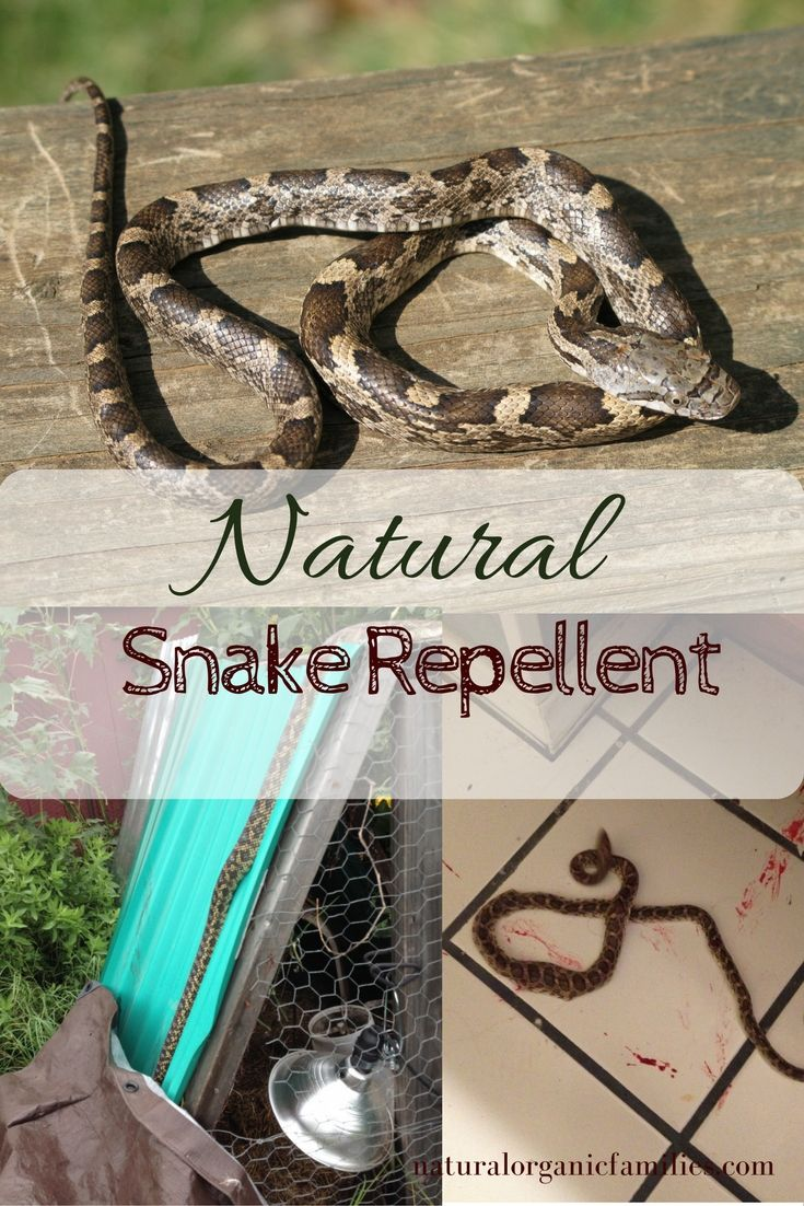 1000 Ideas About Snake Repellant On Pinterest Keep
