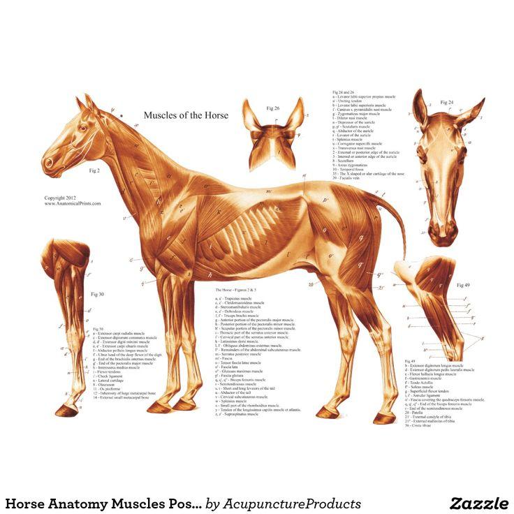 215 Best Horse Anatomy Images On Pinterest Horse Anatomy Horse