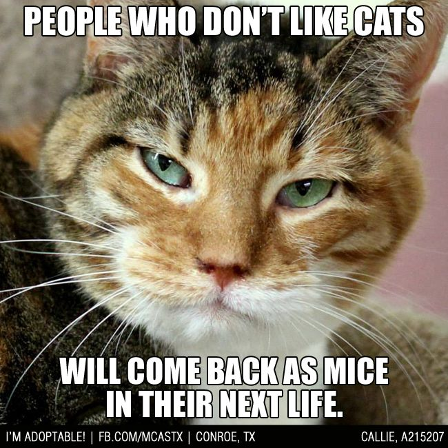 Fair Warning: Karma can be brutal! #funny #cats #mcaspets