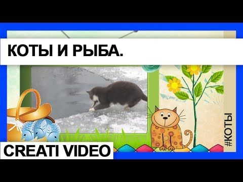 Видеоклип Коты и рыбки.Серия 17. Рыбки и коты. Видео-клип