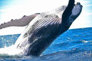 Updated website with new page about whales, including several links about the 52 Hertz whale, also known as the Lonely Whale