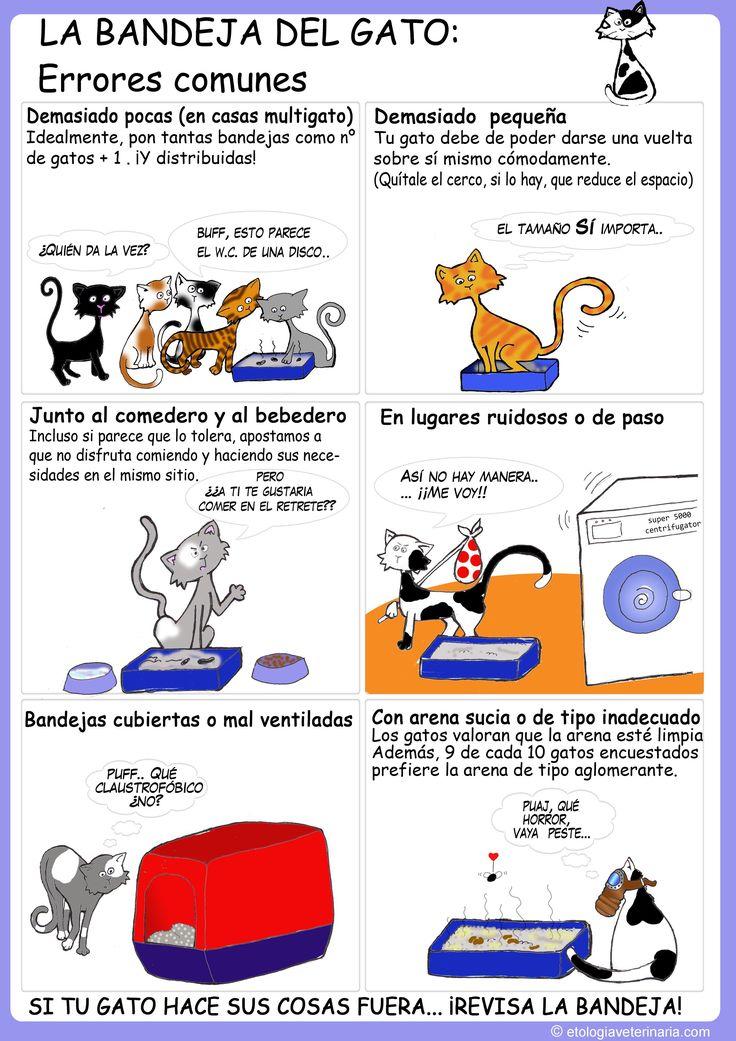 Errores comunes en la bandeja del gato