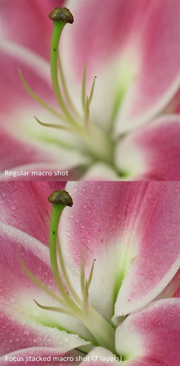 How to get sharp macro shots with focus stacking - Digital Cameras: SLR & Compact Cameras
