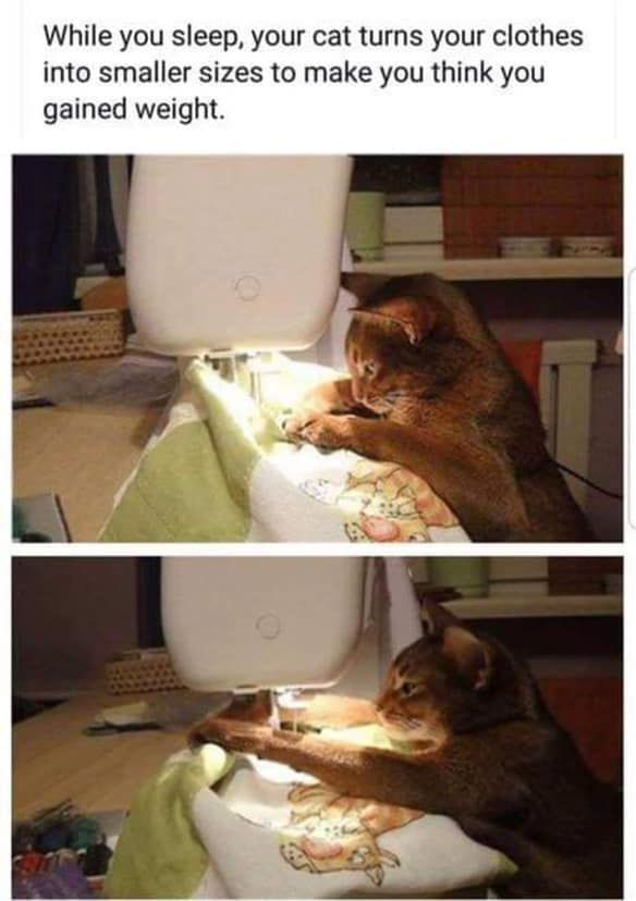 Click The Photo For More Funny And Cute Cat Videos And Photos Cutecats Catloverscommunity Cats Kittens Catvideos Funny Animal Memes Cute Cat Gif Dumb Cats