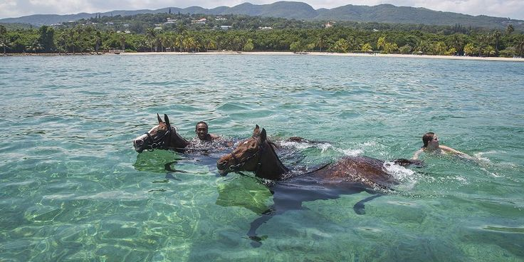 The Horses of Half Moon – Such a Lively Bunch! http://www.jamaicamyway.com/montego-bay/the-horses-of-half-moon/