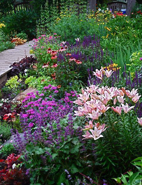lys, sauge, l'échinacée et plus dans un jardin de vivaces ...