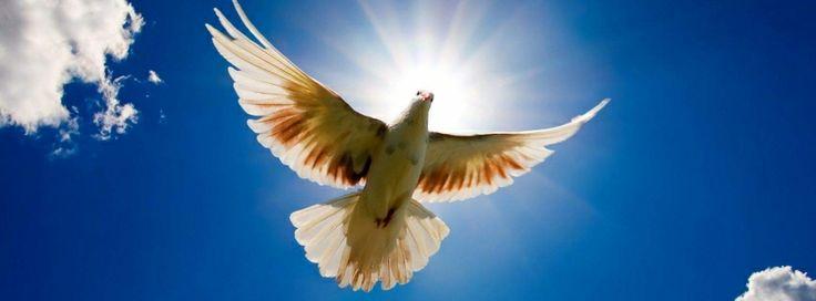 bird #facebookcovers #facebook #fly #flying