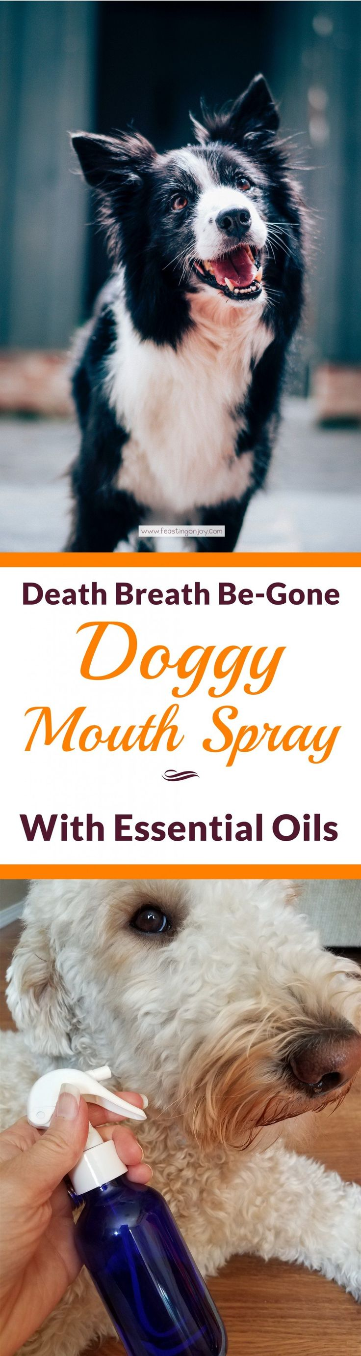 Death Breath Be-Gone Doggy Mouth Spray with Essential Oils | Feasting On Joy