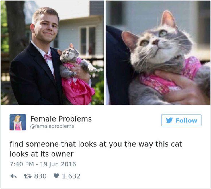 Best Bein Cooooooooooooool Images On Pinterest DIY - The 27 funniest tweets about cats in 2016
