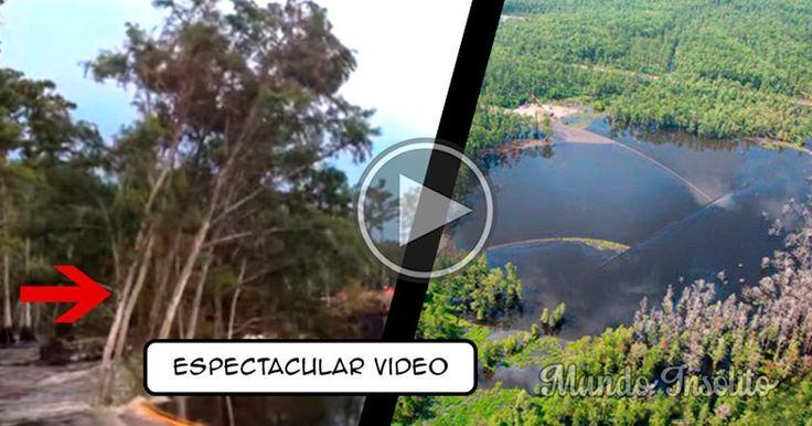 Agujero se TRAGA ÁRBOLES de 30M en segundos y desconcierta a Luisiana | Mundo Insólito