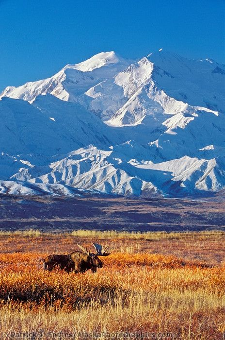Mt McKinley - We're going to take a flightseeing tour of the mountain.