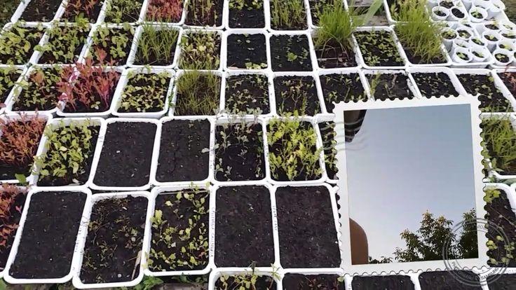 A Tiny Farm - Current Situation -Farm Walkaround tour - The Nursery part 2