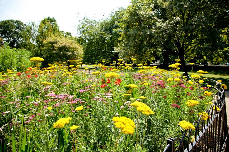 Spring wildflowers in Greenwich Park