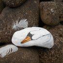 schöner Schwan, auf Fluss-Stein gemalt, mit schöner Struktur, die einem Gefieder gleicht. Der Stein wurde mit Acrylfarben bemalt in weiß, grau, schwarz, orange. Die Farben sind laut Hersteller...