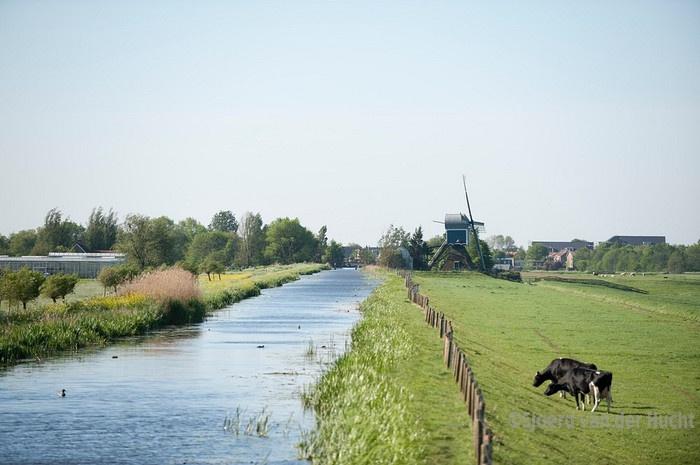 Natuurgebied langs Spookverlaat tussen Alphen aan den Rijn en Hazerswoude-Dorp - Nature near Alphen aan den Rijn