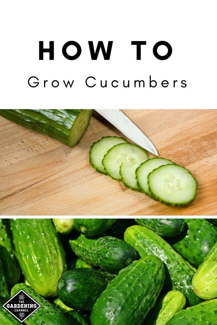 How to Grow Cucumbers, Including Small Space Varieties – garden pots