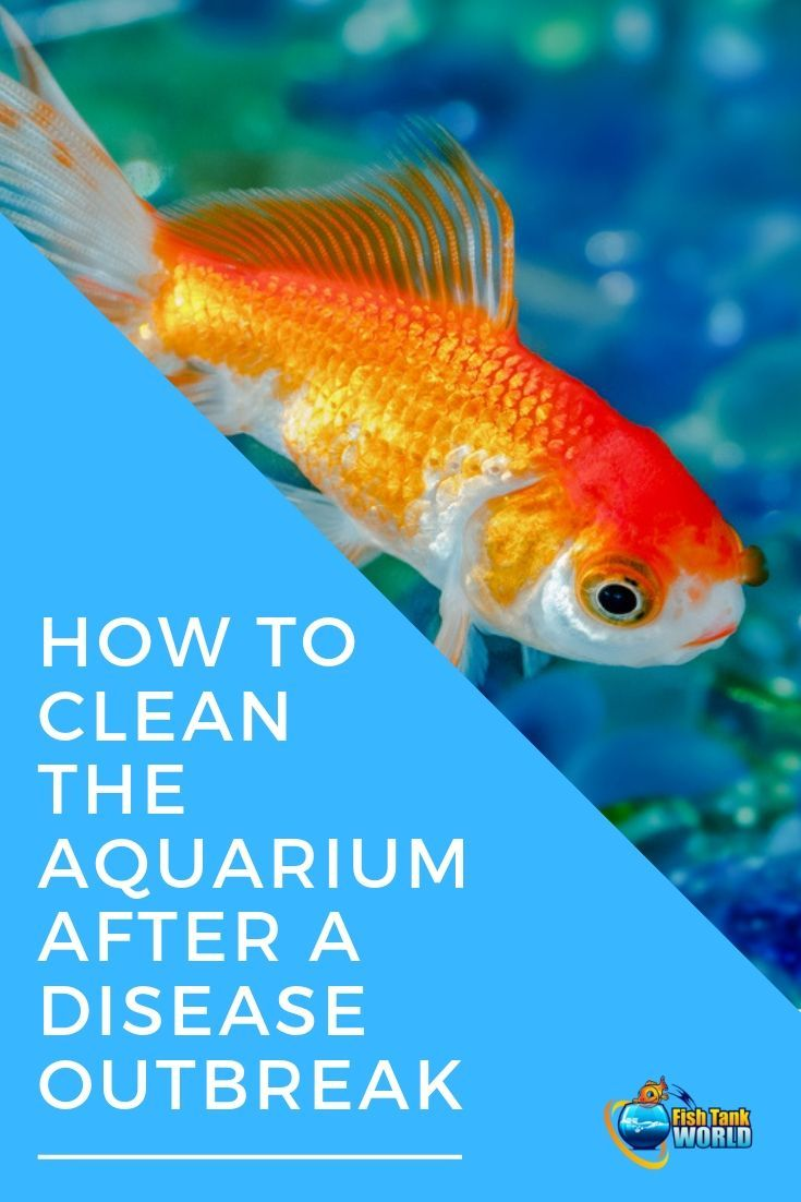 How To Clean The Aquarium After A Disease Breakout Fish Tank