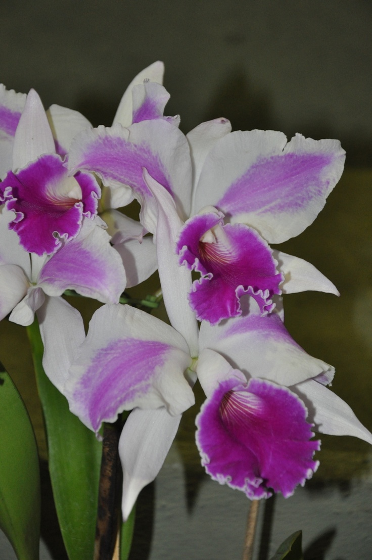 17 Best images about Orchids on Pinterest | Buckets, A ...