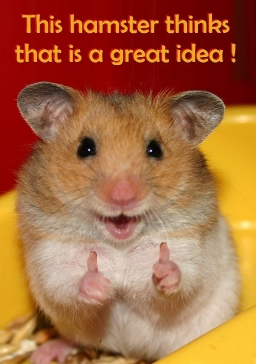This hamster thinks your idea is great. Properly no one else does :P