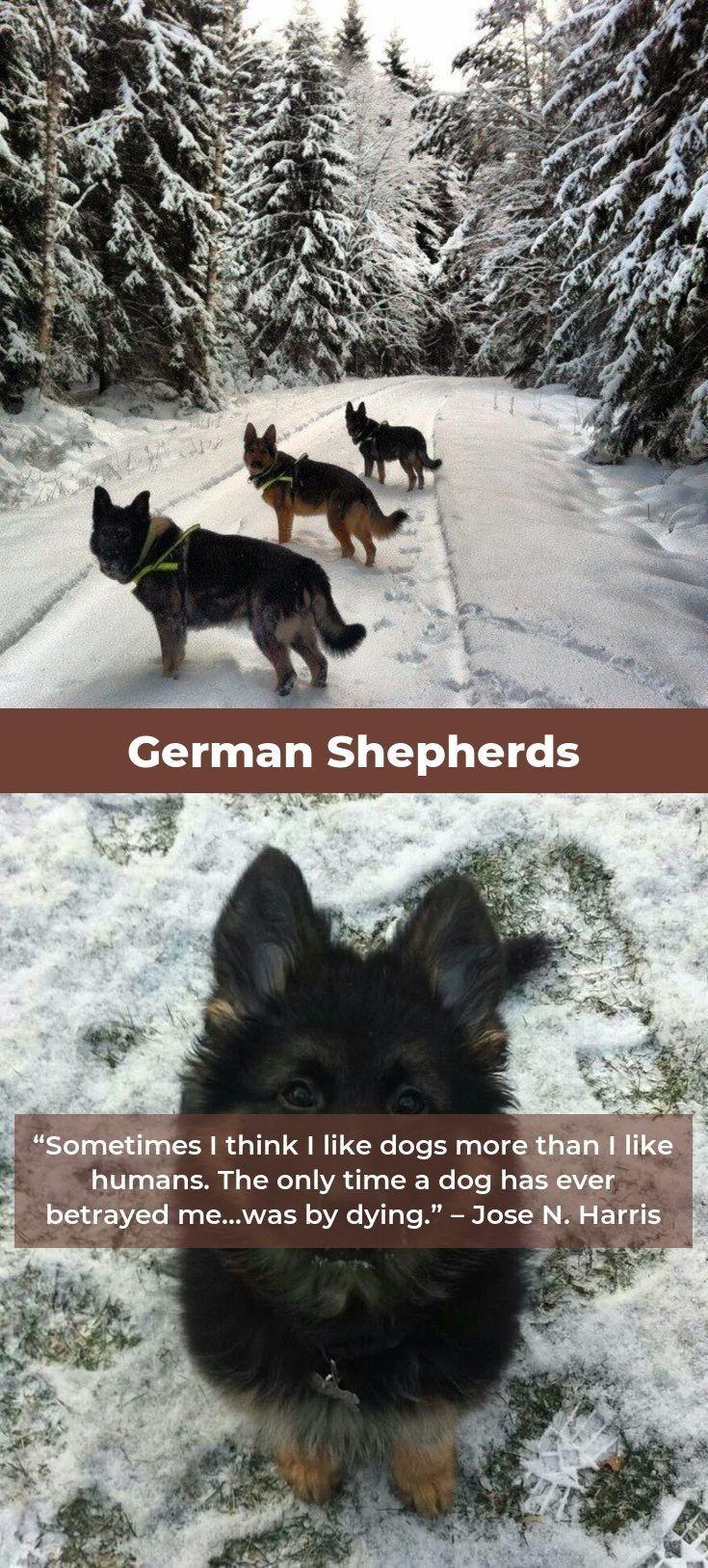German Shepherd Training Germanshepherdworld