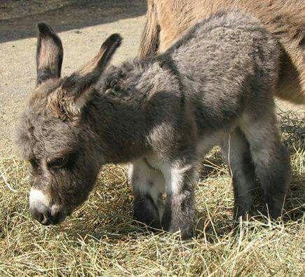 1day donkey