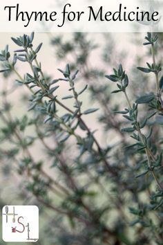 Don't ignore the spice rack when treating common ailments. Learn to use thyme for medicine to remedy digestive issues, colds, and more.: