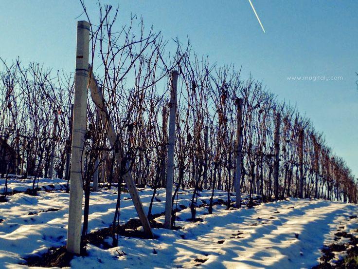 Langhe - Unesco 2014 winter vinjard
