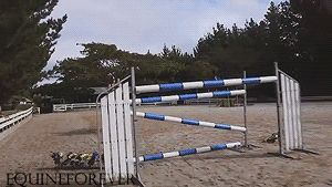 I really want to do this one day! (I just need to get my horse to jump higher than 3.5 feet first :P)