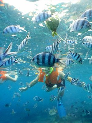 Snorkeling at Hanauma Bay Nature Preserve ~ 30 minute drive east of Waikiki, or take the #22  bus. Bring your own snorkel gear or rent it there