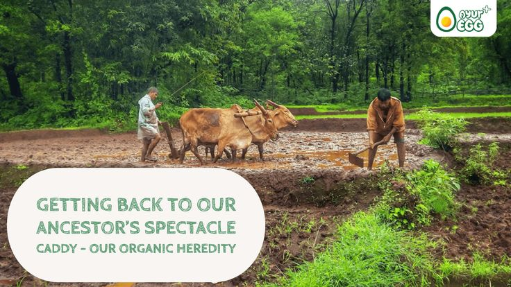 Its time we get back to our ancestor's spectacle caddy. Its time we bring back their farming & food practices & get back to our #organic heredity. #AyurEggBlog #Hyderabad #Bengaluru #ayuregg #AreYouEatingEggsOrDrugs