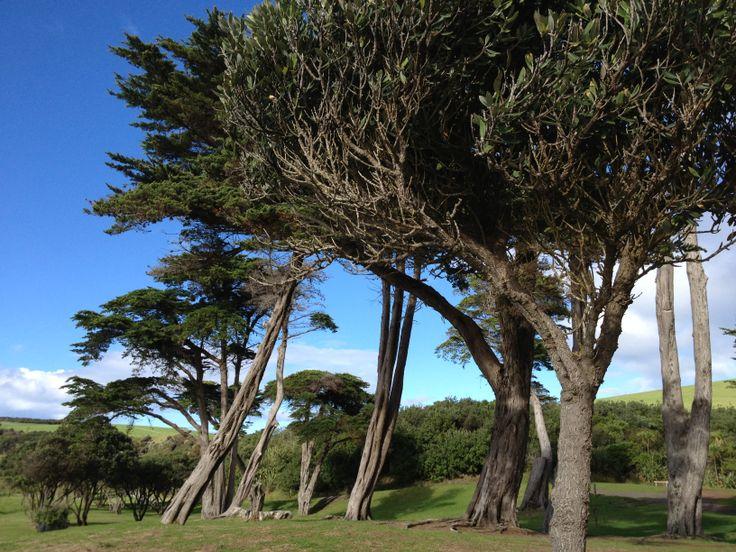 Tawharauni Beach www.wooree.co.nz
