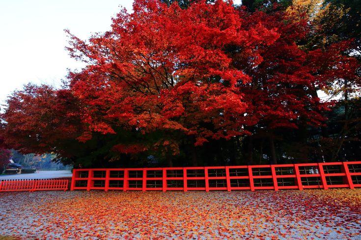 高画質 上賀茂神社 紅葉 写真 秋 京都