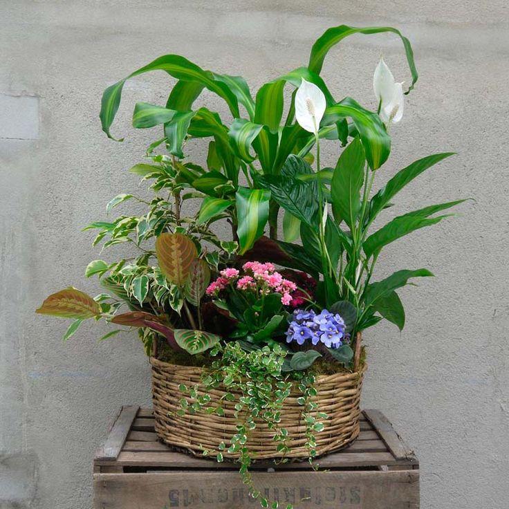 Esta cesta de plantas en flor es una opción muy acertada para regalar si lo que buscas es un centro llamativo y duradero. Envío a domicilio en Madrid.