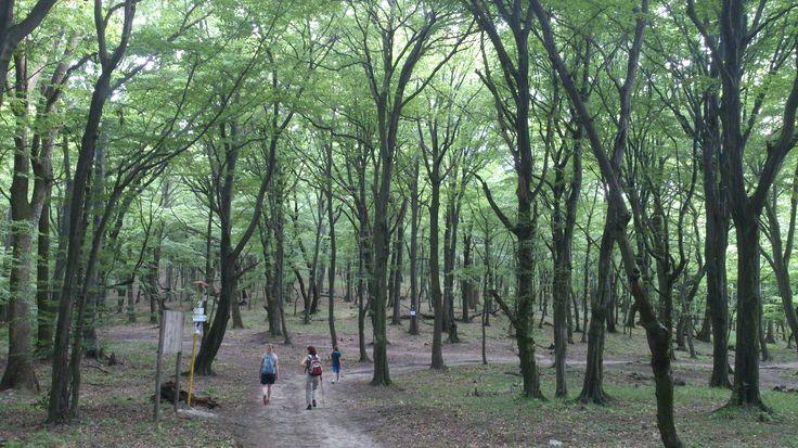 forest, Vinné, Slovakia