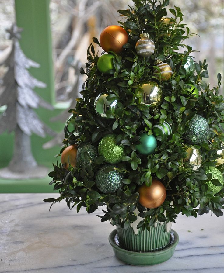 Make a Last-Minute Christmas Boxwood Tree Gift | eHow Home