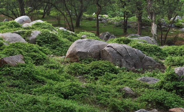 Image result for forest Rocks and Boulders