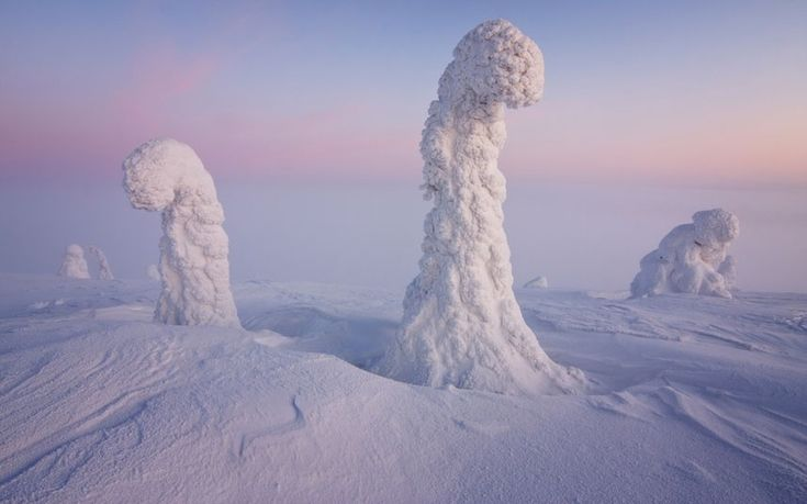 This may look like an alien landscape, but this picture actually shows trees buried under a foot of snow close to the Arctic Circle. Italian student Niccolo Bonfadini spent nine days camping alone in the frozen world.