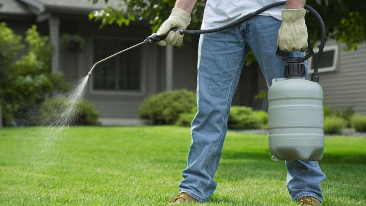 Pest in Snohomish is a basic problem. To control it you have to discuss it with the professional ant removal team. To get the correct solution you have to visit our site for more details.