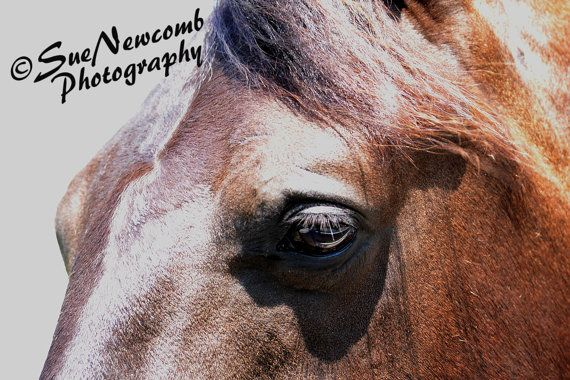 Bay Horse by SueNewcombPhotos on Etsy. Horses are favorite subjects of mine and I loved the kindness in this horse's eyes.