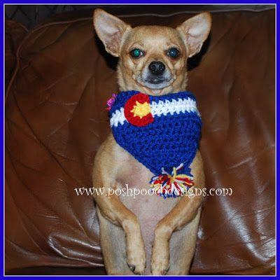 167 besten Chihuahua Fun Bilder auf Pinterest | Kleine hunde ...