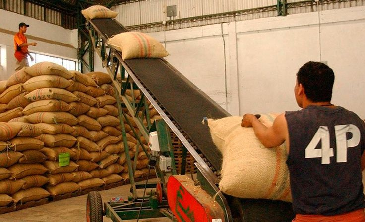Exportación de café aumentará este año un 40%