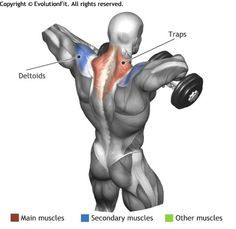 TRAPS Exercise  - STANDING DUMBBELL UPRIGHT ROW