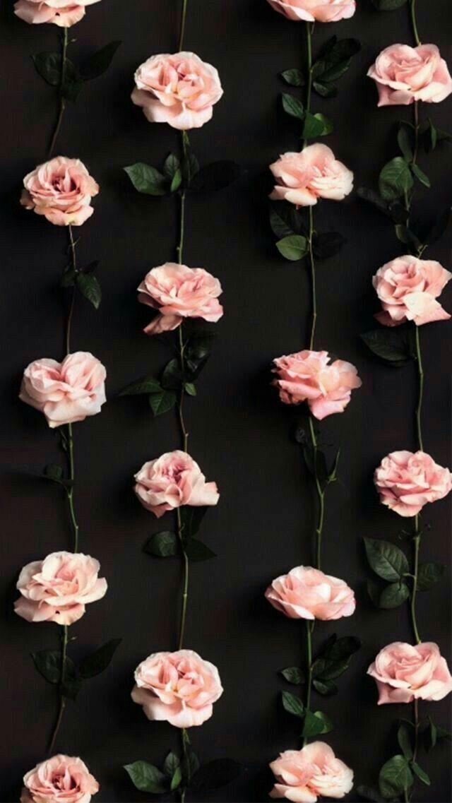 Lock Screen Pink Flower Wallpaper