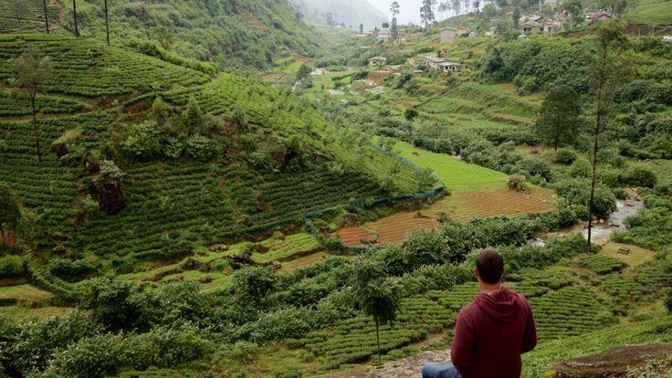 Tea Fields in Ella Sri Lanka