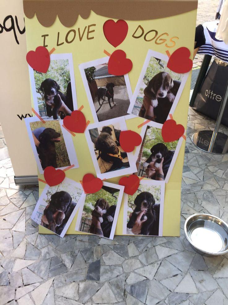 L'Associazione Squadra 4 Zampe cerca volontari attivi nella zona di MILANO. L'attività del volontario di Squadra 4 Zampe si svolge principalmente in rifugio dove i nostri cani sono ospiti .Il volontario in rifugio fa passeggiare i cani, li spazzola, li coccola, interagisce con loro e controlla il loro benessere psicofisico, tutto ciò con l'obbiettivo di preparare il cane all'adozione,ma non solo!Se vuoi saperne di più chiamaci o scrivici! Info: Cristina Nera Responsabile dei volontari…