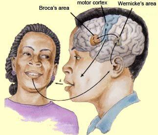 Existen dos áreas implicadas en el lenguaje. Por un lado, el área de Broca se encarga de generar el lenguaje, y por otro, el área de Wernicke es responsable de la comprensión del mismo. Referencia Diferencia entre el área de Broca y el área de Wernicke en el cerebro. (2015). Habitosdesaludfamiliar.blogspot.com.es. Retrieved 6 April 2017, from http://habitosdesaludfamiliar.blogspot.com.es/2015/04/diferencia-entre-el-area-de-broca-y-el.html